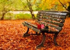 Autumn Roses